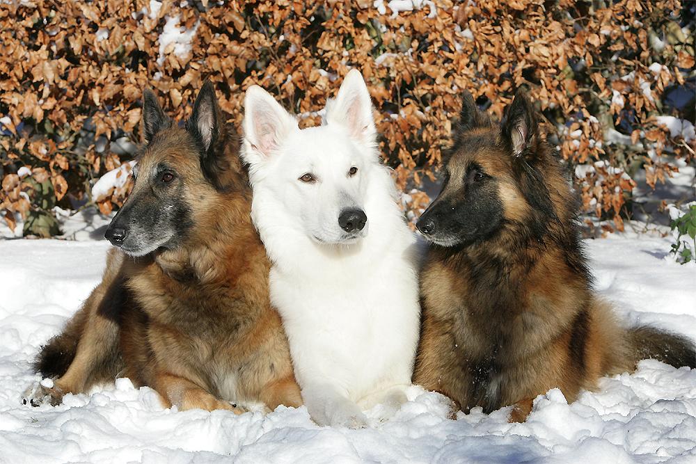 Jungs im Schnee