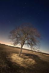 Standing Alone with the Stars (Explored) (Insight Imaging: John A Ryan Photography) Tags: longexposure toronto ontario tree night fullmoon aficionados chathamkent pentaxk10d starswirl wwwinsightimagingca johnaryanphotography