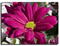 Summer Bloom (Mike926.) Tags: summer flower macro canon amazing perfect awesome greatshot macroshots freephotos 40d canon40d macroshotsflower mikederby