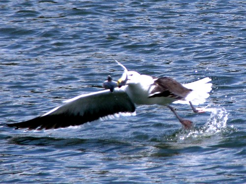 shark seagull Gallery