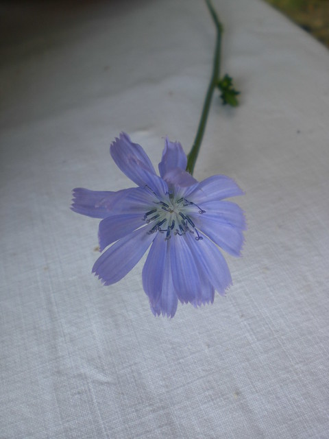 my favorite flower picked by one of my sons