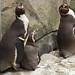 Woodland Park Zoo Seattle 058