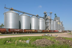 Loading Train in Forman, ND (mwahlsten) Tags: northdakota forman grainelevator dmvw dakotamissourivalleywestern dakotasubdivision