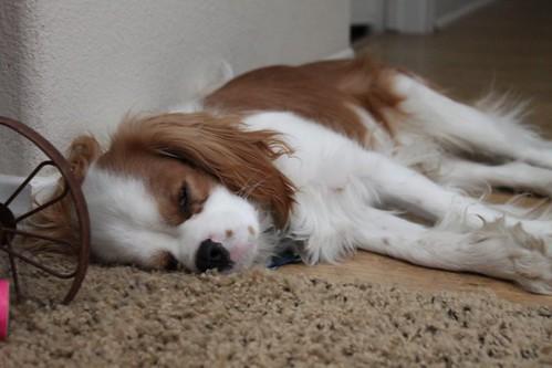 sleeping charlie