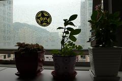 화분들 뒤로 창에 맺힌 빗물