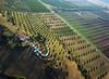 Tholos Tomb of Poggio Pelliccia Vetulonia I - R8726 (opaxir) Tags: italy archaeology tomb aerial tuscany kap toscana grosseto etruscan maremma tholos tumulus vetulonia gavorrano