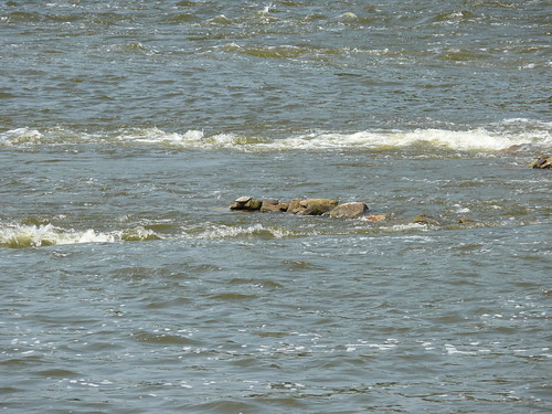 Turtle Sunning on the Rocks in the Grand River