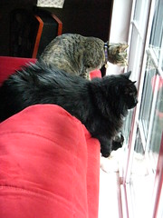 Huggy Bear, Maggie and Josie watching a squirrel on the deck