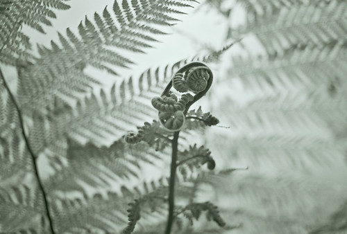 Tree Fern -- colorized