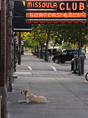 Dog on Tarp Outside of a Downtown Missoula Bar (CT Young) Tags: dog bar montana mt missoula rockymountains divebar bigskycountry missoulamt missoulamontana missoulaclub downtownmissoula burgersandbeer missouladowntown canong9 canonpowershotg9 downtownmissoulamt downtownmissoulamontana dowtownmissoulamt barsinmontana amontanabar