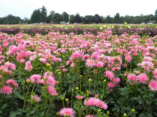 3902393358 6bd29a9b3e {Field Trip!} Honkin Huge Flowers