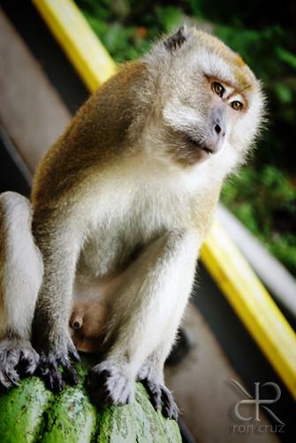 batu cave monkey