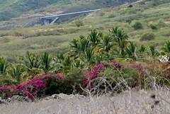 Leon n18 : l'envoyer sur les roses (x3401) Tags: bridge architecture concrete palm viaduct route pont palmiers beton tablier viaduc tamarins ledelarunion spielmann bracons setec ouvragedart granderavine routedestamarins