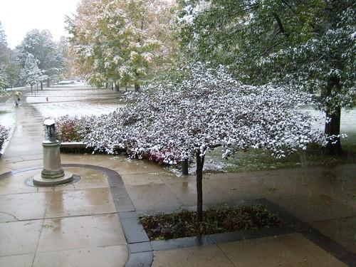 Snowtree I