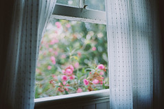 windows (ashley oostdyck) Tags: newhome oleander bedroomwindow afternoonlight