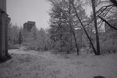 B/W Snow