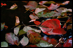 (seyed mostafa zamani) Tags: autumn color art nature beautiful canon nice kiss colorful iran dreams iranian       450d