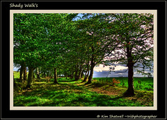 Shady walk's (Irishphotographer) Tags: travel trees ireland beautiful forest walking walks solitude calm peacefull kinkade longford beautifulireland irishphotographer lx3 imagesofireland kimshatwell breathtakingphotosofnature shadywalks beautifulirelandcalander wwwdoublevisionimageswebscom