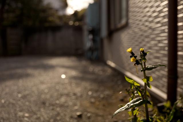 軒先の雑草