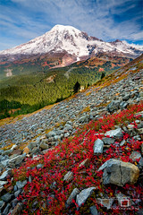 Fall Chills - Mount Rainier NP, Washington (Adrian Klein) Tags: blue red snow cold fall sunshine clouds sunrise canon washington alone northwest hiking freezing rocky foliage alpine mountrainier slope gitzo fstop veritical adrianklein