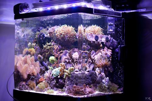 Calcul Eclairage Led Aquarium Recifal Nayatidreams
