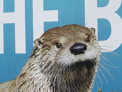 Otter Signage (shaire productions) Tags: sf sanfrancisco cute animal sign fun photo spot photograph touristy signage otter pier39 imagery