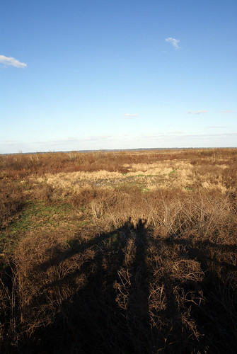 Shadows at Paynes Prairie.