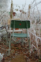 Spot (D is for Doris) Tags: winter cold leaves chair frost hoarfrost spot icy allotment redspot frostyleaves