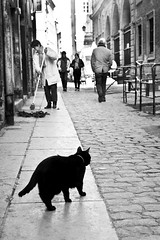 Le Lyon du Vieux chat (David**T) Tags: street bw white david black france cat canon photography chat noir lyon candid streetphotography nb mimi ruelle rue bernardo blanc matou vieux tang pav vieuxlyon photoderue chezmimi mywinners bestofcats