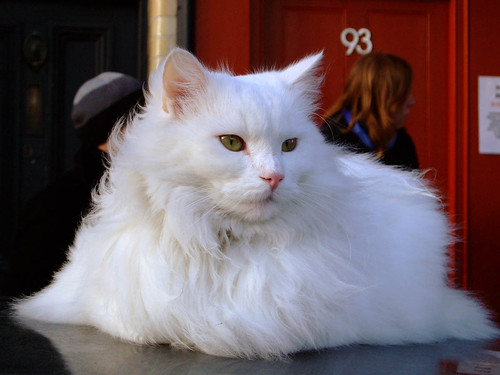 columbia road cat