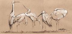 white flag(s) (Jennifer Kraska) Tags: art birds sketch jennifer marker coloredpencil kraska