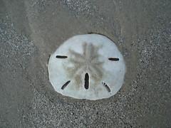 bolacha da praia