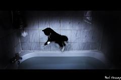Bath time. 2/365 (Paul Fessey) Tags: pet cat paul happy photography nikon bath kitten abuse d300 fessey omglawl