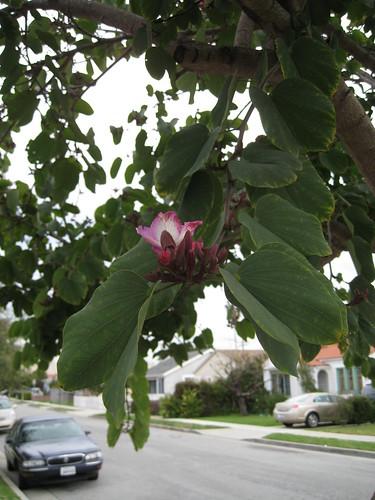 mystery tree flower