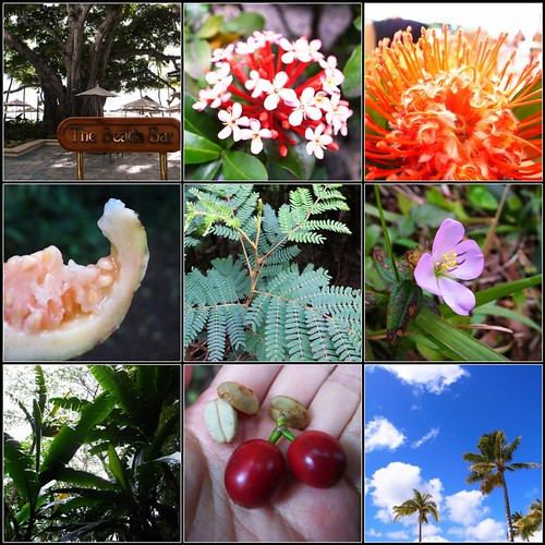 plants in hawaii
