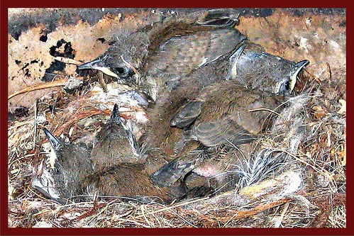 BBQbirds1