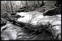 running water with log (Garrett Meyers) Tags: road trees white house black mountains bird water grass night clouds barn river landscape photography sticks sheep anniversary thing or seagull fake running s falls m hills garrett 25th meyers barbaque tobaggan glamis