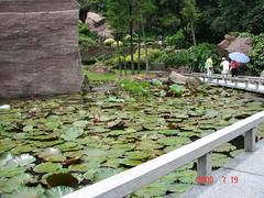 Lotus pool2