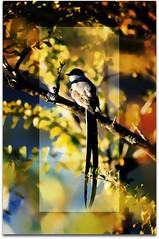 brincando (Edison Zanatto) Tags: brazil naturaleza flower bird planta nature brasil natureza natur flor pssaro ave blume pssaros vogel nikonn90s fujicolorprovalue200 filme35mm edisonzanatto