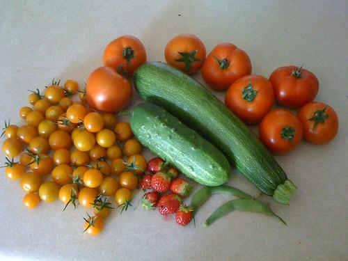 Garden Harvest 7/16/09