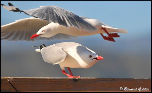 Duck I'm Landing