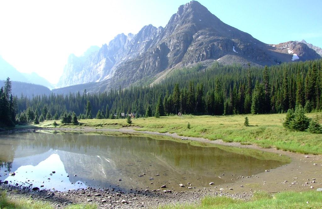 meadow next to Elizabeth Parker Hut