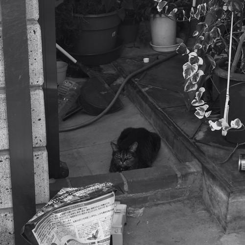 Today's Cat@20090823