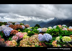 Beautiful Kodai (Smevin Paul - Thrisookaran !! www.smevin.com) Tags: flowers india mist mountain fog garden paul photography niko