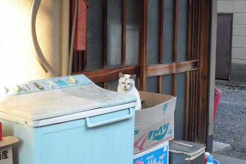Today's Cat@20090917