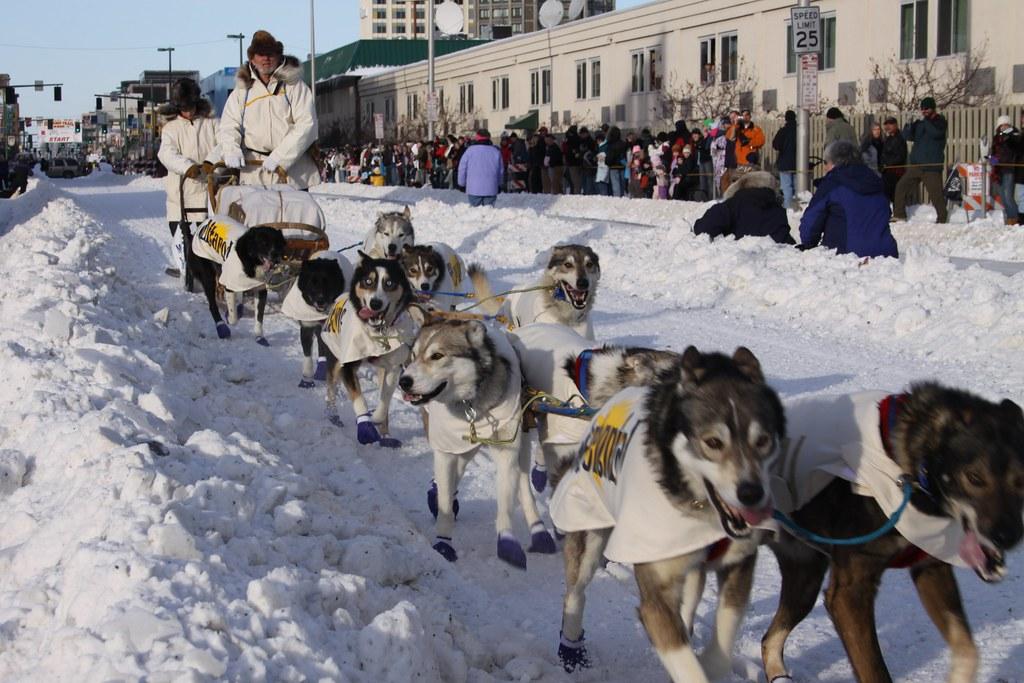 Iditarod Team