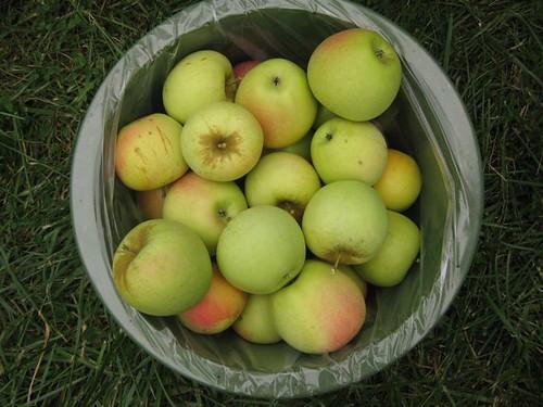 Apples - haul