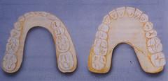 ivoire et forme anatomique
