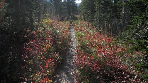 Glacier National Park - Fall Colors Emerging