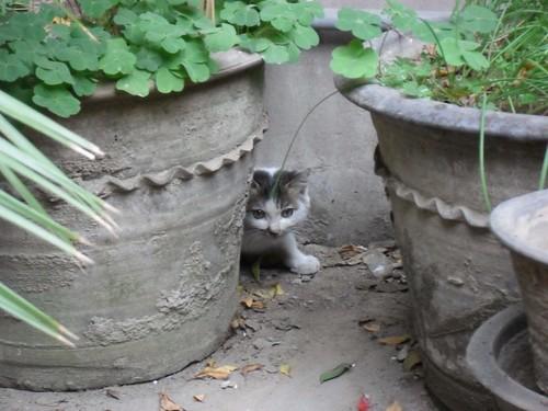 一日一貓,蛋友來稿:院子裡的那隻貓